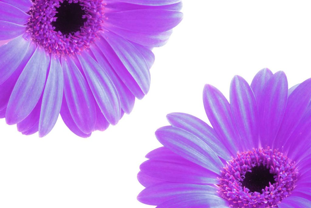 flowers-urinary-tract